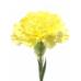 Диантус / Гвоздика (цвет на выбор)