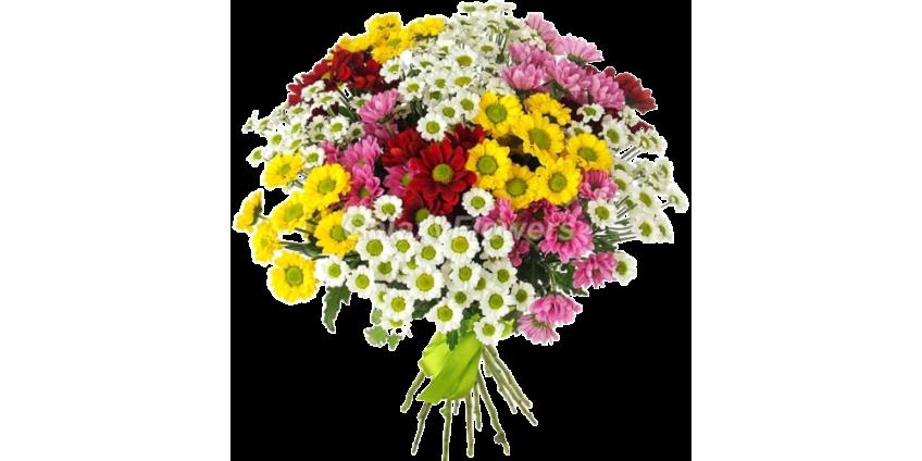 Хризантемы яркие краски осени