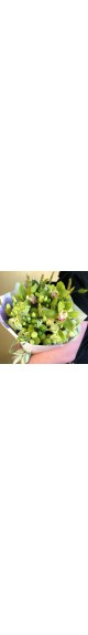 """Букет из Орхидей """"Свежесть"""""""